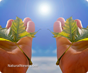 Hands-Holding-Plant-Leaves-Sky-Sun-Vitamin-D