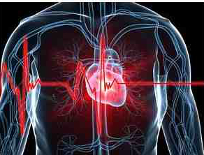 HRR58_Heart